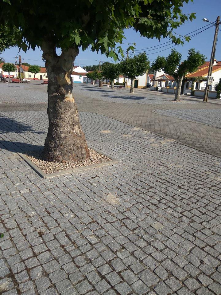A junta de freguesia procedeu à colocação de seixo nas bases dos canteiros das árvores